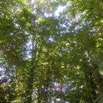 El cielo entre los árboles