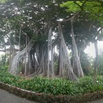 The big tree inside