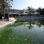basen przypominający szambo