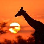 Sonnenuntergang im Makgadikgadi NP