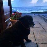 Lovely Rolo! The gentle doorwoman.