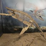Short-necked Plesiosaur