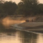 Elephants crossing the river near the Camp