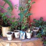 stekjes in de tuin