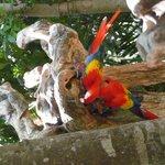 Wildlife at XCaret