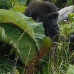 Dublin Zoo - lots of hiding spots