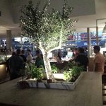 An olive tree in vapiano