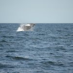 Picture of a whale breaching close to our ship
