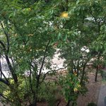 Peaceful view of leafy trees from our second floor room.
