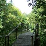 un des petits ponts que nous traversons lorsque nous nous promenons le long du canal