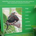 Sign about butterflies