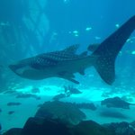 Cool whale shark!