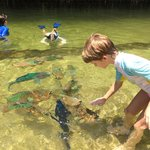 Feeding the parrotfish was the highlight of the visit!