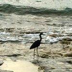 Bird on beach