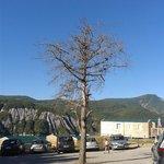 Peu de végétation et des arbres morts