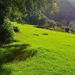 芝生でノンビリ過ごすのもいいかも