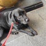 Carly Copley, Canine Ambassador