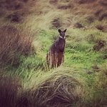 Wallabies - we saw so many of them along the way to Phillip Island. Fantastic!!