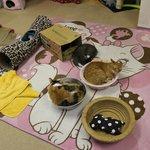 Cat cafe ASAKUSA NEKOEN (2014.02.26)