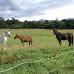 Horses in nearby field