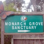Monarch Grove Sanctuary, Pacific Grove, Ca