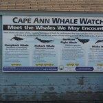 We saw fin backs and minkes!