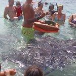 Fish, shark, manta ray feeding time.