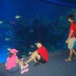 The Seas with Nemo...