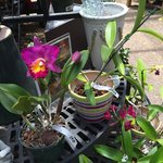 so much orchids to buy :)