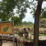 Elephant obstacle course