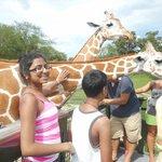 Meeting the Giraffes