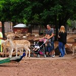 The deer were very friendly with families.