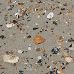 Shells at Ocracoke Beach