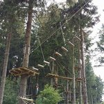 Forest Climb