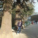 Nature Walk, Shimla Heritage Walk