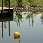 artifficial pond