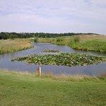 озеро с лебедями и лилиями.