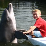 My son interacting with a dolphin