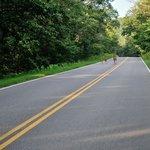 Deers crossing