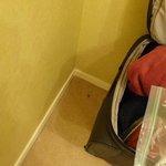 Spider bedroom carpet