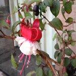 real flower, is it beautiful?