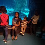 My family enjoying the multicultural environment of the SeaLife in London