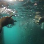 Snorkel Leon Dormido