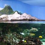Tableau intéressant dans l'aquarium