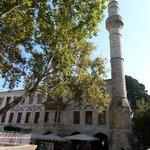 albero di Ippocrate 2