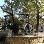 albero di Ippocrate 3