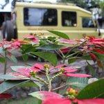 Safari car & flowers