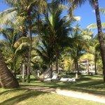 Les jardins de l'hôtel: une végétation luxuriante