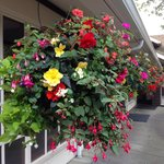 Outdoor flower baskets