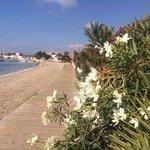 Boardwalk along the beach